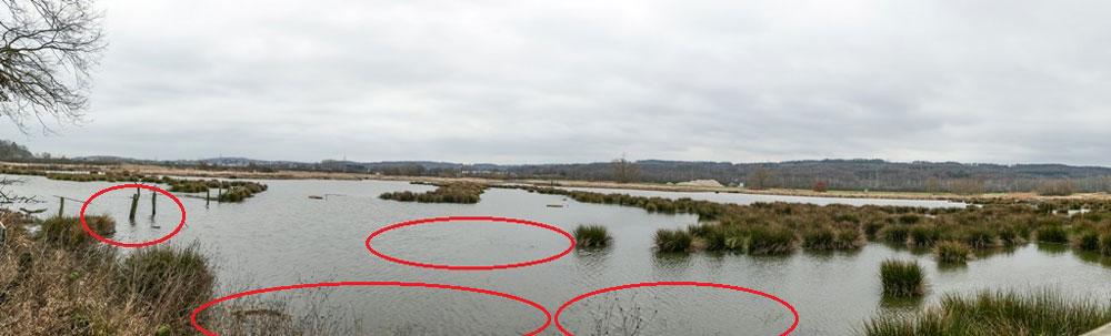Röllingwiese