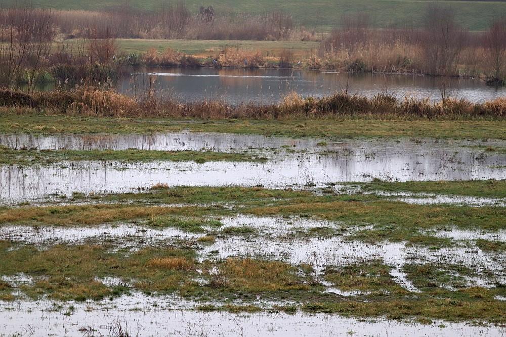 Viel Wasser aber heute kaum Wasservögel im Becken. 20.01.20 Foto: Hartmut Peitsch