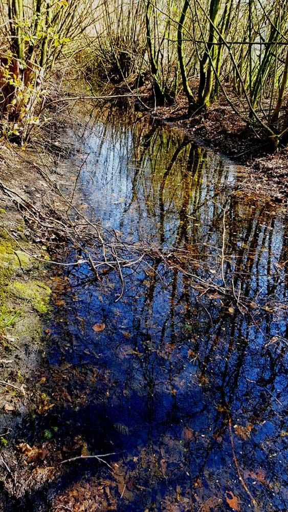 Gewässer Ruhraue Ergste