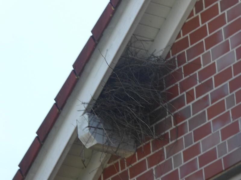 Neststandort der Elster